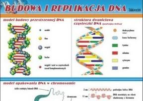 plansze - mikrobiologia i zdrowie człowieka