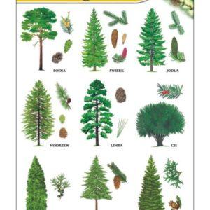 plansze - botanika